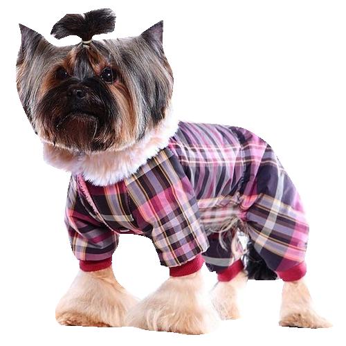 Одежда для собак купить - интернет магазин Bethowen.ru 35df1c0ea6b