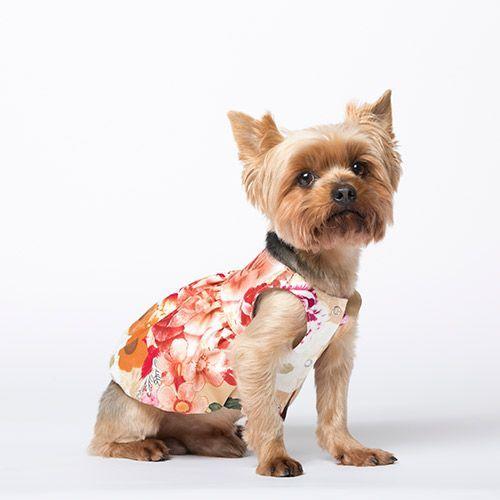 Платье для собак YORIKI Прованс девочка размер XL