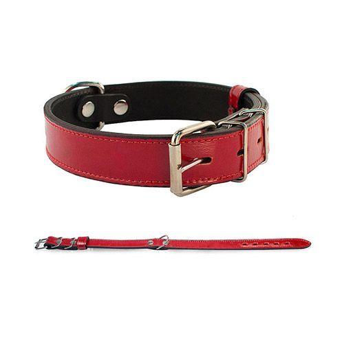 Фото - Ошейник для собак ДАРЭЛЛ Брайт 2 слоя цветной 43-55 см*26 мм поводок для собак дарэлл брайт 2 слоя цветной 14 мм 120 см