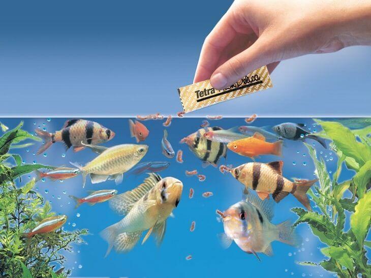 Сколько корма нужно рыбкам в день