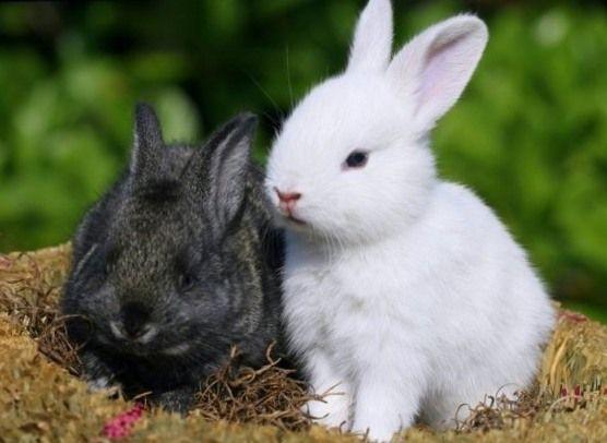 Кролика девушка давит Маша_кидалова_давит_кроликов