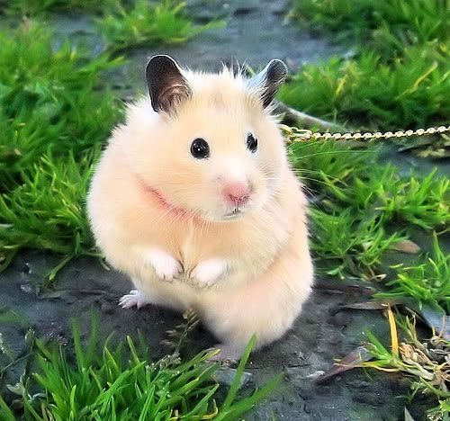 hamster on leash.jpg