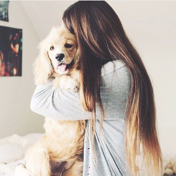 cute-dog-fluffy-girl-Favim.com-2859138.jpg